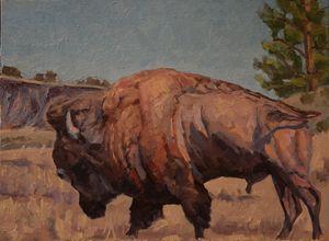 Bull Bison - Scott Scherer Fine Art