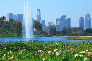 Lotus Blooms & Los Angeles Skyline