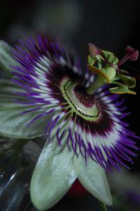 A Flower in Full bloom