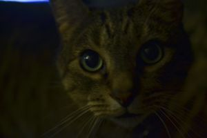 """Sebastian"" A pretty kitty"