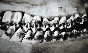 Doe Teeth