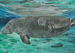 Manatee and her Calf