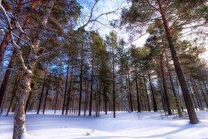 Winter. Forest. Light