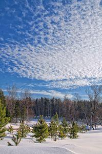 Winter. Field. Fence