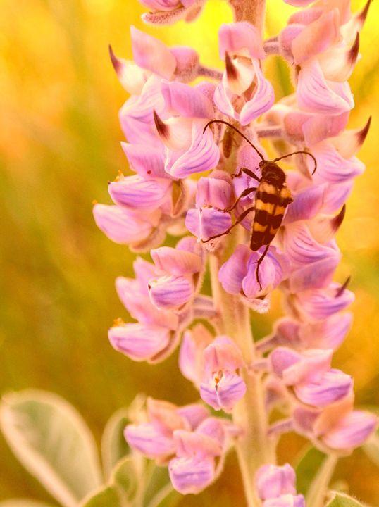 Bug Resting On Flowers - Havalah's Photography
