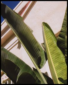 Protecting Palms