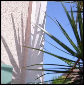 Pink Palm intervention