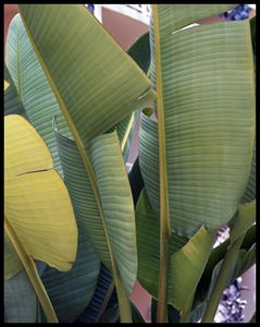 Palm Harmony