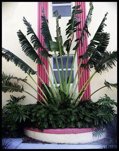 Palm Curtains