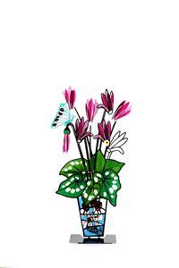 Cyclamen Vase Pink Flowers Tzuki
