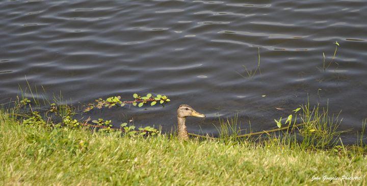 Duck Head - John Gonzales PhotoArt