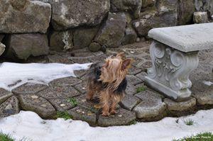 Little Winter Yorkie Profile - John Gonzales PhotoArt
