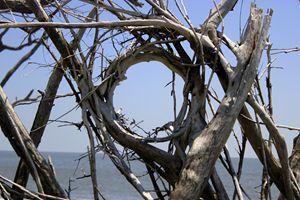 The Natural Porthole