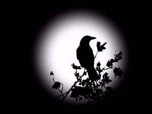 Blackbird in Silhouette