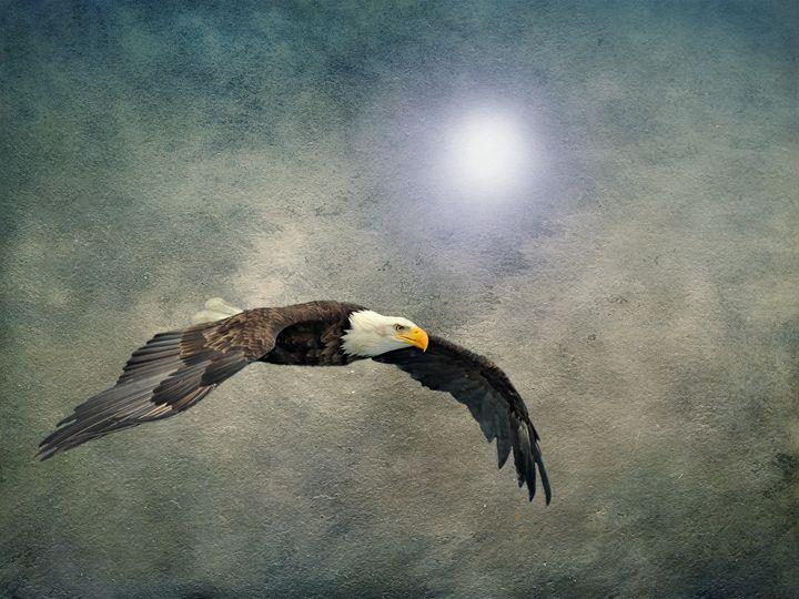 Bald Eagle Textured Art - David Dehner