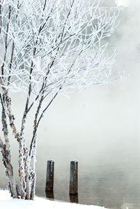 Frozen River Birch