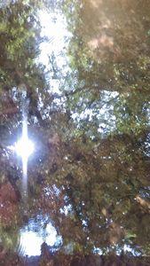 Through the Trees....