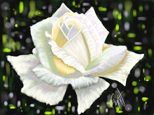White Rose 11