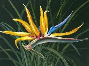 Bird of Paradise - Margie's art