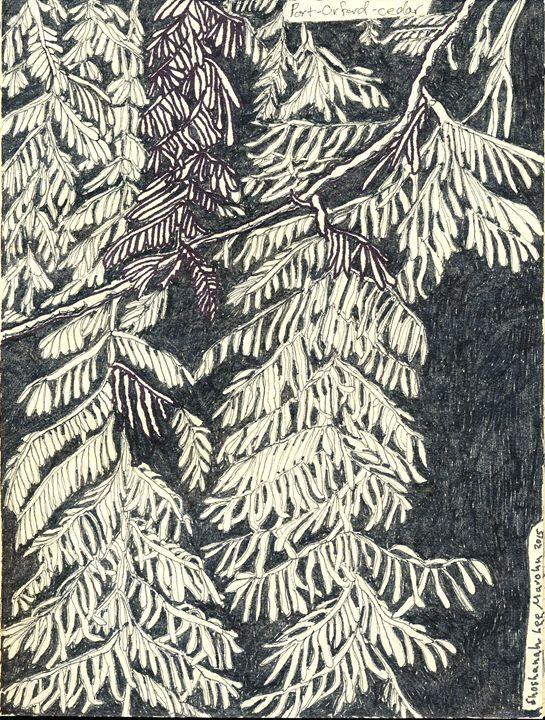 Cedar - Shoshanah's Art