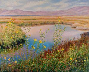 Salt Marsh, Don Edwards Preserve