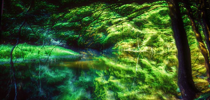 Reflection from a pond in New Jersey - karl krueger