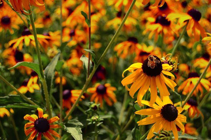 Sunny Bee - Phlipd Signals