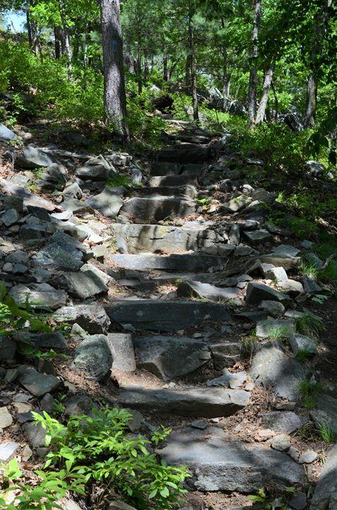 Higher Paths - Phlipd Signals