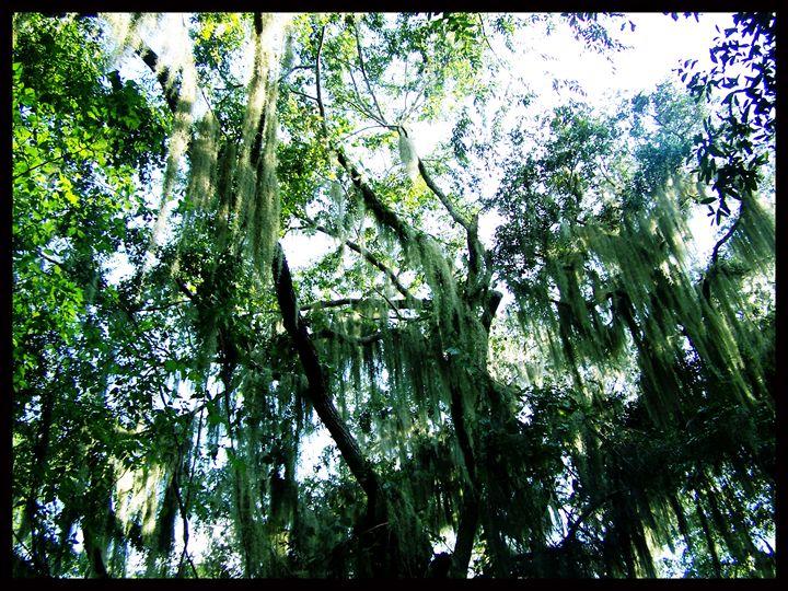 Treeline Light - Creations of a Seeker of Signs