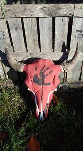 Real Buffalo skull