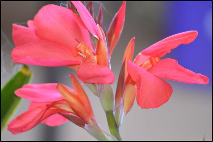 Flowers - LynneE