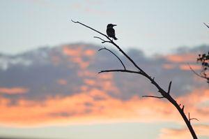 Bird at Sunset - LynneE