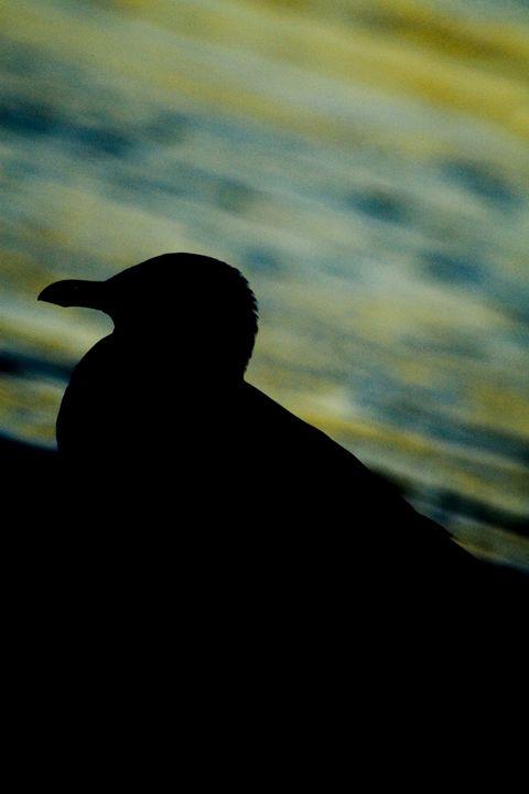 Sea Gull Silhouette - ArtByLaurenBritz