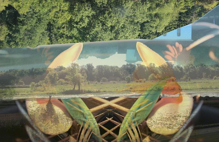 Homeward Bound - Custom Collages