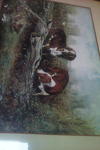 hunting dog quails