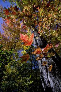Lake Maria Autumn