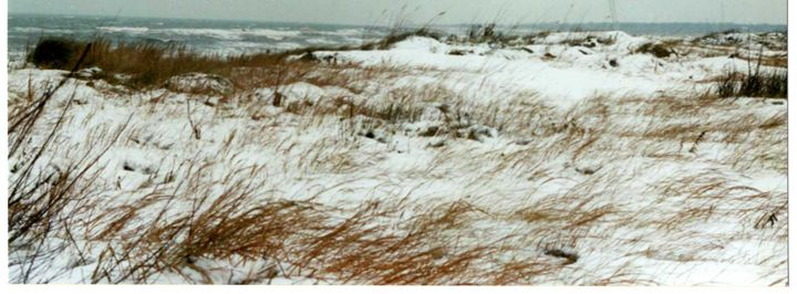 Frigid Sea Oats - Ben Salomonsky Photographic Designs