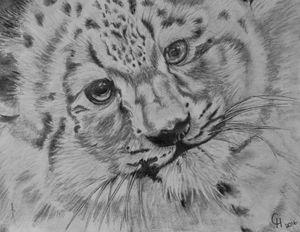Snow cub - courtneysillustrations