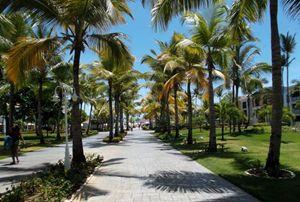 Palm trees walkway
