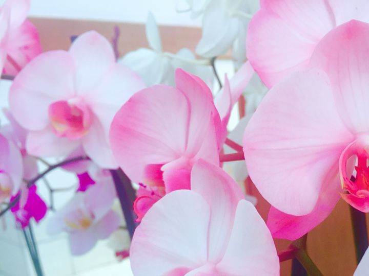 Joyful Orchids - PeaceAndSerenityArt