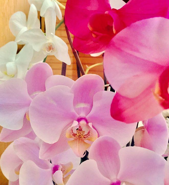 Colorful Orchids - PeaceAndSerenityArt