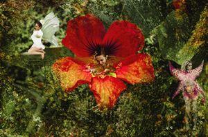 """""""Flower Fairies"""""""