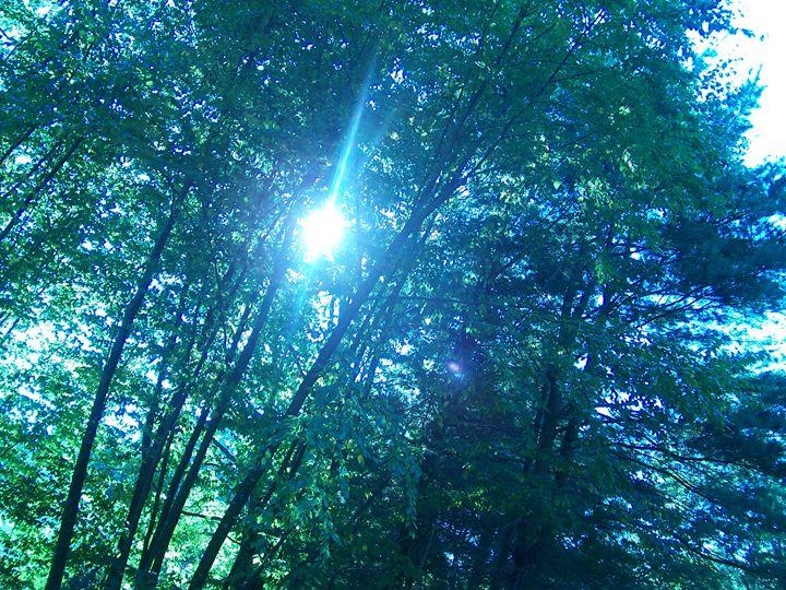 Blue Morning - Silva Nature Photography