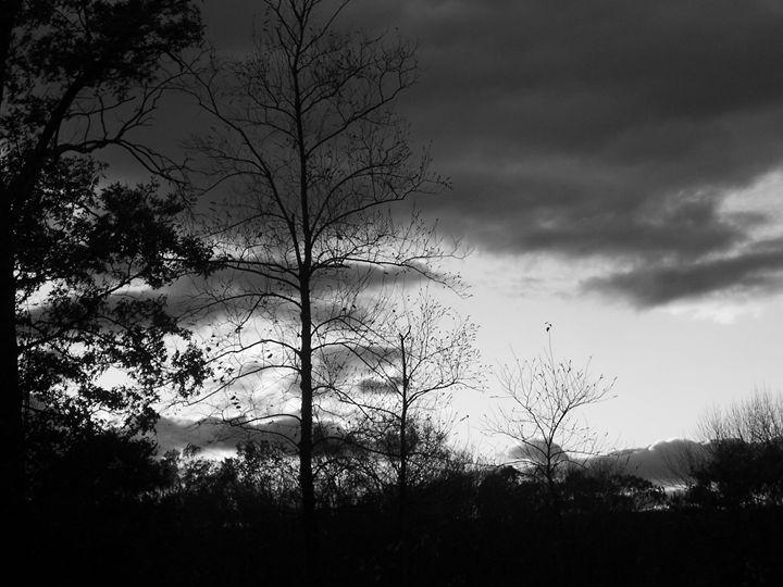 Dramatica - Silva Nature Photography