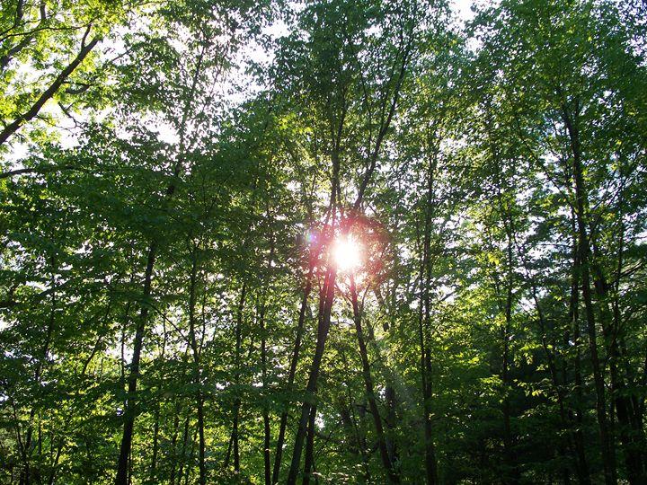 Enter The Light - Silva Nature Photography
