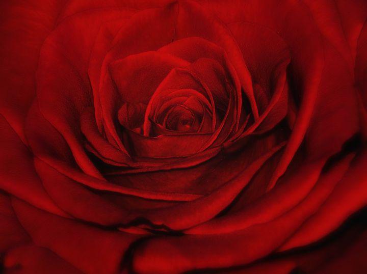 Apolotomy of the Heart - Silva Nature Photography