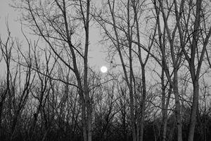 full moon through the trees
