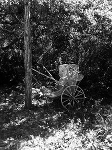 antique carriage in the garden