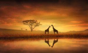Dreaming of Africa - Jennifer Woodward
