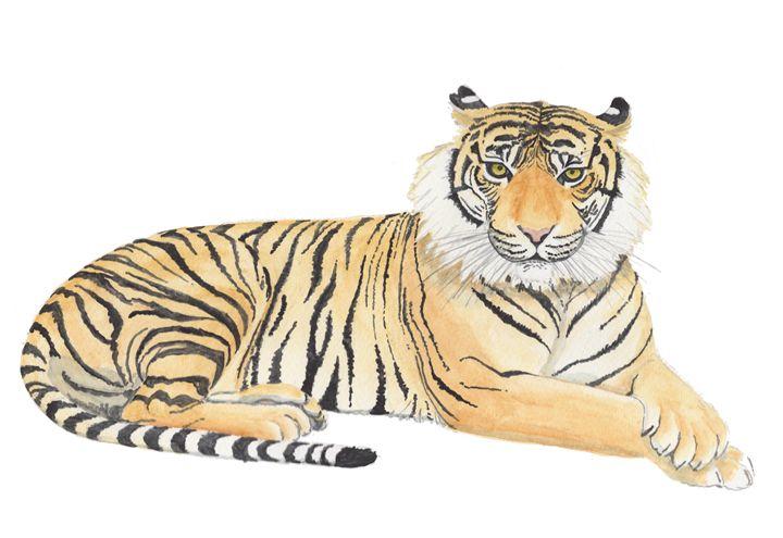 Tiger - The Montessori Company